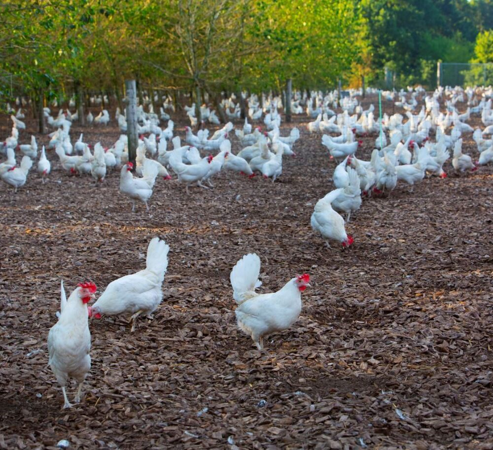 Production Specialist Organic Eggs