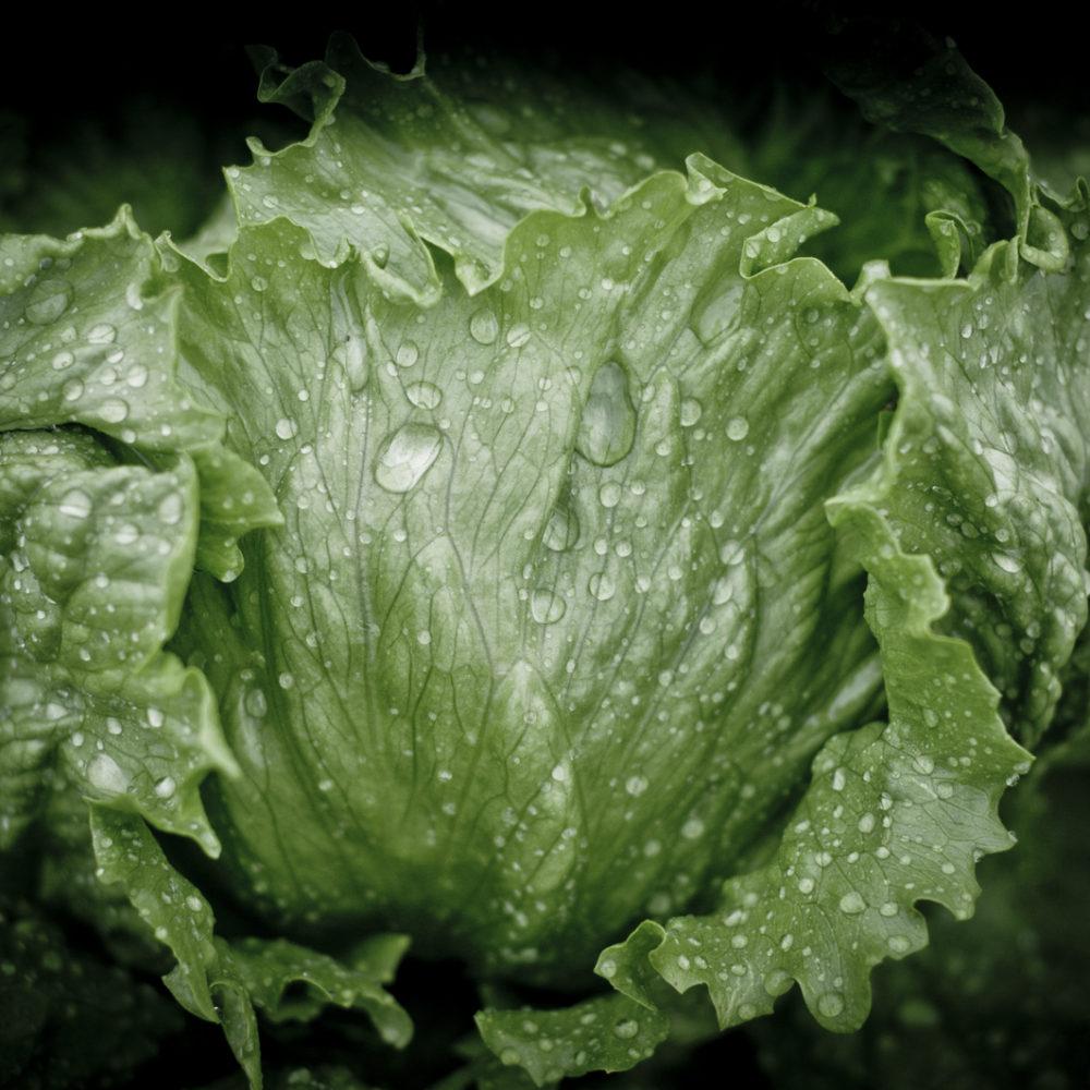 VIDEO: Sådan laver vi økologisk iceberg