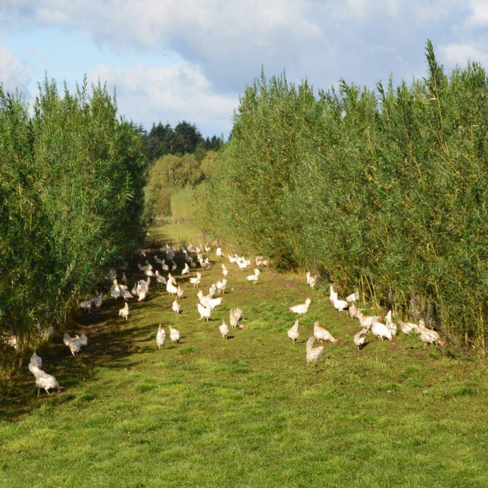 VI SØGER – Produktionstekniker til den økologiske ægproduktion