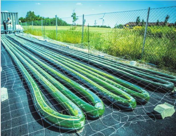 Microalgae as protein for the future?