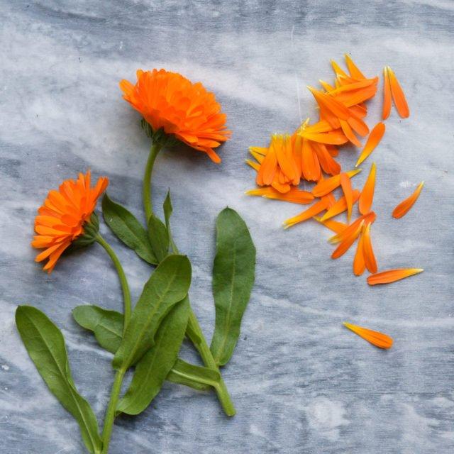 Friske urter og spiselige blomster